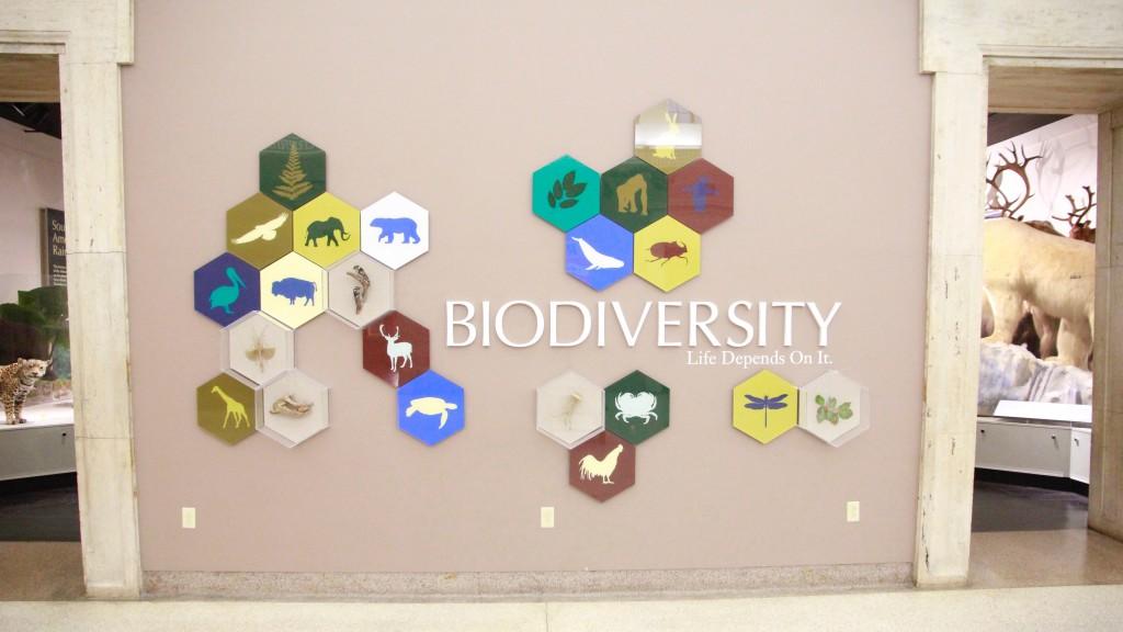 biodiverstiy